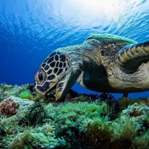 Community event /  Photo exhibition of sea turtle in Taiwan84 people interested ...