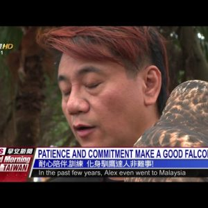 PATIENCE AND COMMITMENT MAKE A GOOD FALCONER|耐心陪伴.訓練 化身馴鷹達人非難事! - PTS Good Morning Taiwan