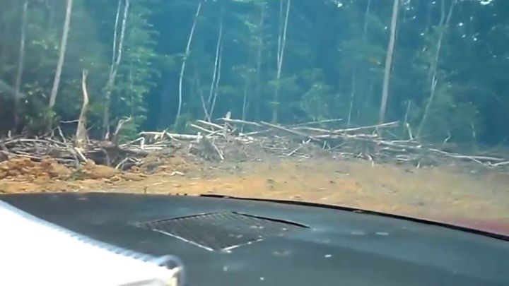 Video/ areo / wild !Marque seu amigo(a) que voa garimpo !! P…