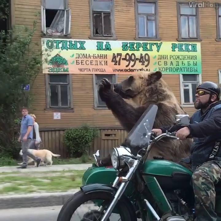 Video / fun/ just a biker dailyOnly in Russia ???ViralHog