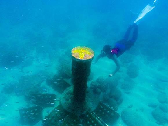 全台唯一海底郵筒 澎湖啟用了