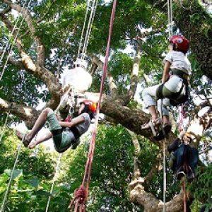 攀樹 台北市 場域 士林芝山文化生態綠園