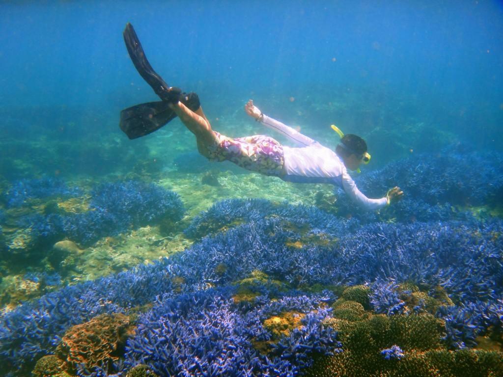 台灣是海洋生物多樣性之島 - 國家地理雜誌中文網