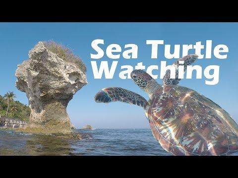 Topic Video / Sea Turle In Taiwan  Credit: 許文俊   #FearlessIs...
