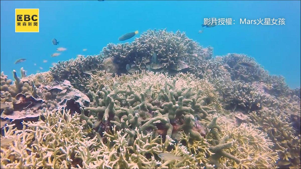 潛進藍海被魚群包圍視覺衝擊網讚:這是墾丁嗎?