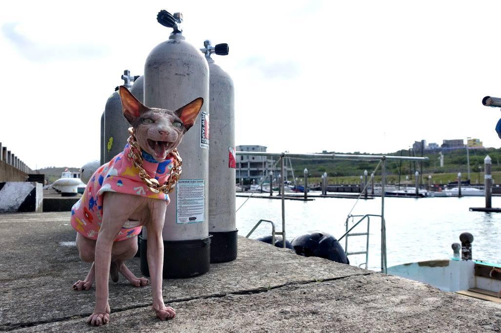 Manta又游回來了啦! 還不快回來跟我一起航向偉大的航道嘛!喵! 🤜✨🤛 #墾丁 #船潛 #旅潛 #後壁湖 #PADI