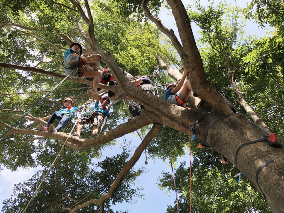 台灣極限運動 Tree Climbing in Taiwan