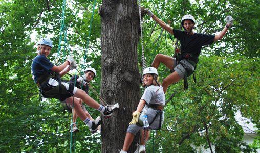 tree climbing kids