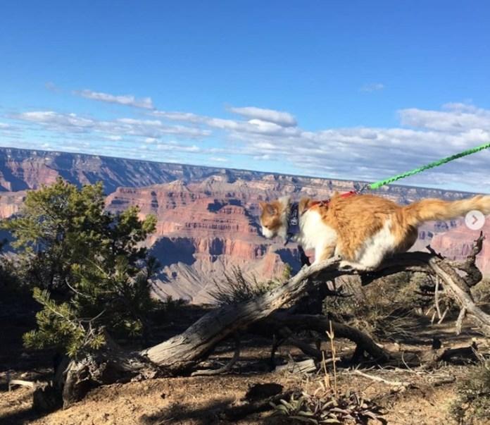 貓星人遠足露營做運動 美國興起帶貓參與戶外活動熱 | 張伯倫 |...