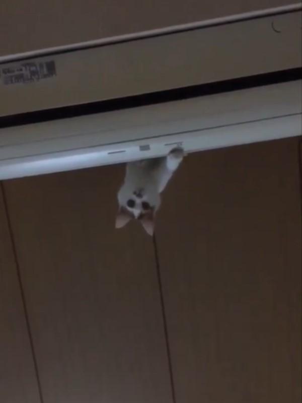 1616158289 110 影玩高空彈跳?貓