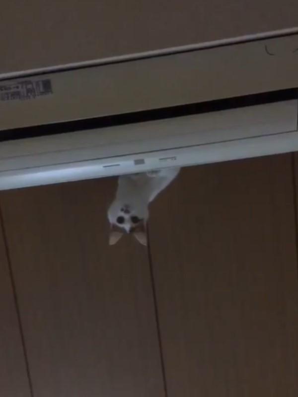 1616158289 353 影玩高空彈跳?貓