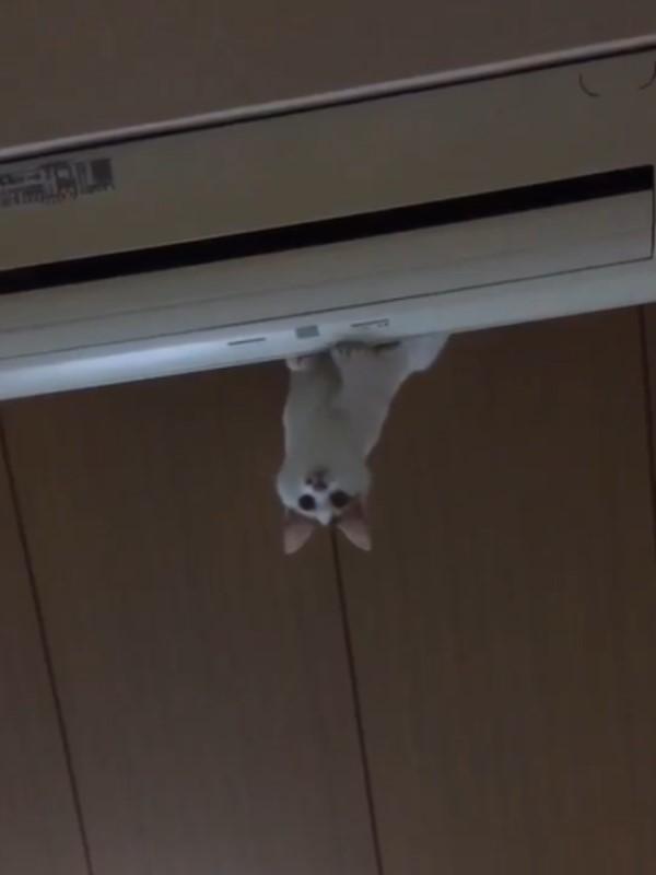 1616158289 564 影玩高空彈跳?貓