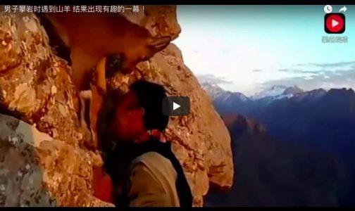 男子攀岩时遇到山羊-结果出现有趣的一幕!